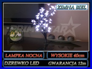 dzrewko-zimne-.jpg